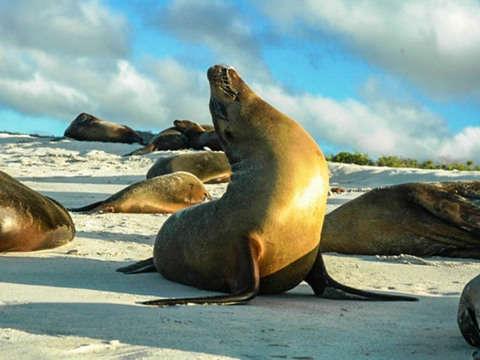 4d/3n Paseo en Yate, Snorkeling y Excursión por Galápagos