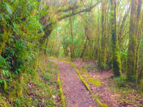 Walk through the Podocarpus National Park