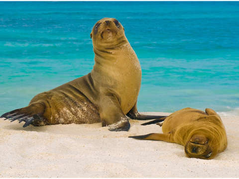 4d / 3n Excursions in the Galapagos Islands