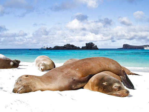 4d / 3n Bay Tour and Snorkelling in Galapagos