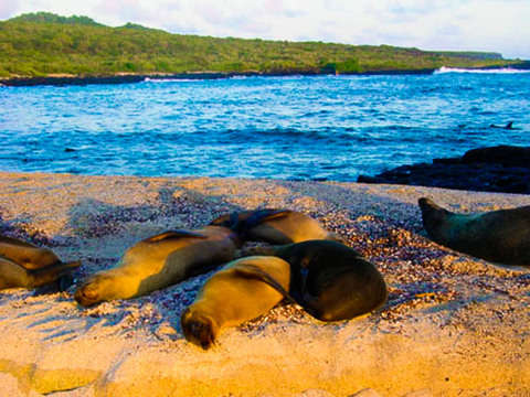 5d / 4n Yacht Tour in Galapagos